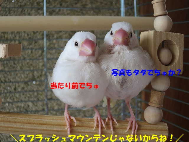 IMG_4345.jpg