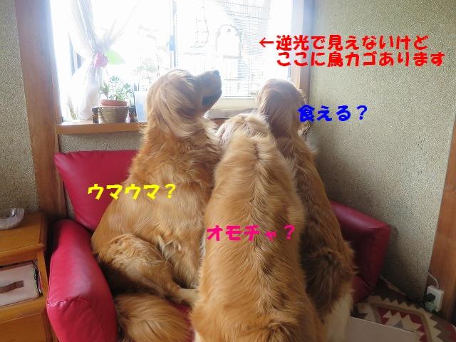 IMG_4485_20150624093634829.jpg