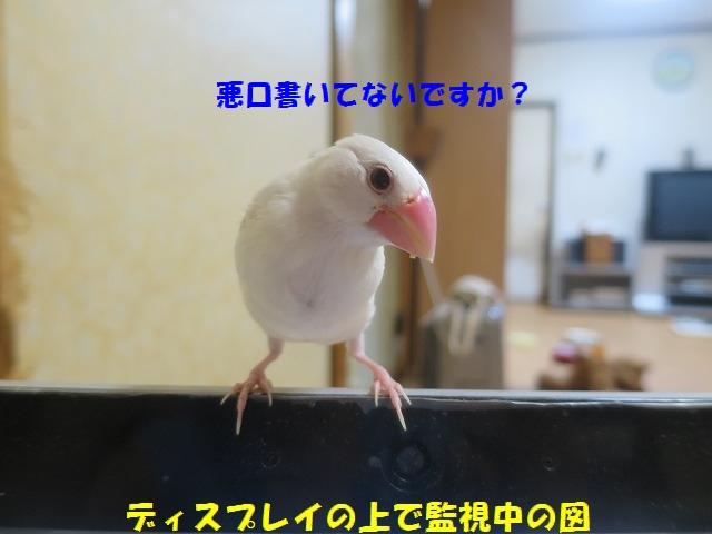 IMG_4526_1.jpg