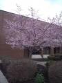 RITキャンパス(山桜)