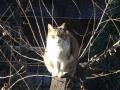 愛猫:2015.03.24