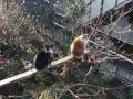 愛猫たち:2015.03.31
