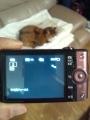 DSC-WX100が受光不良
