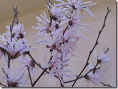 150326032 シデコブシの花