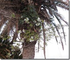150326033 ヤシの幹に宿っているサクラの花