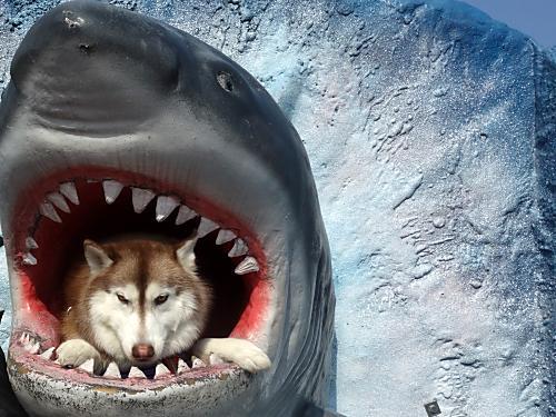 サメに食われる
