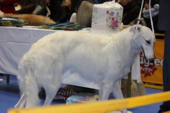 dog5447 (29)