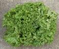 150611 lettuce