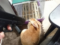狐巣 兔様
