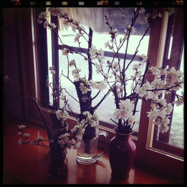 山形おばこ 桜