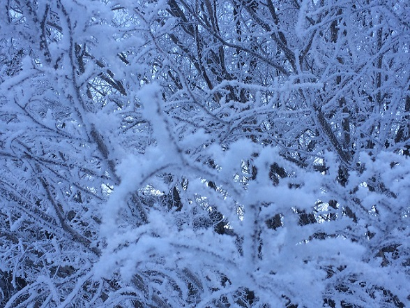 霧氷か樹氷どっちかな