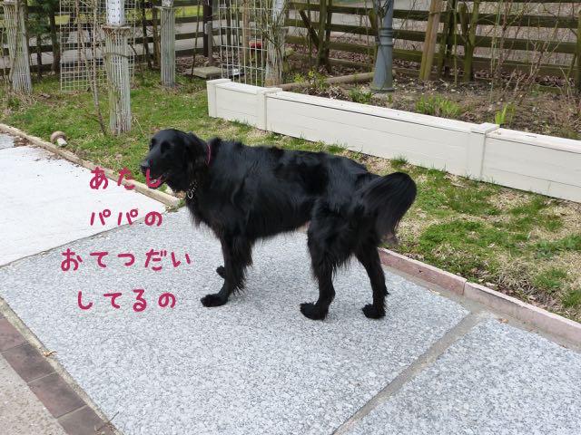 L1130607.jpg
