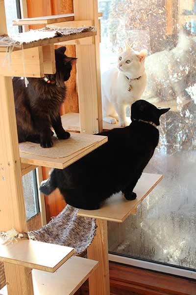 手作り猫タワー
