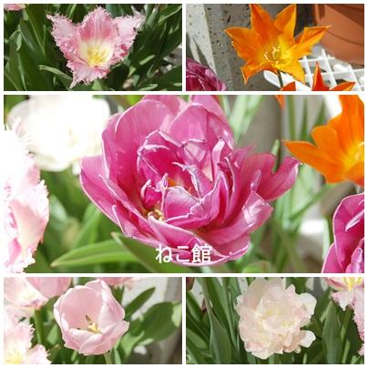 blog11_20150504155230cd5.jpg