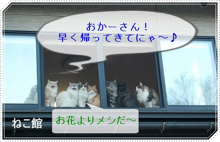 blog2_20150501091939f06.jpg