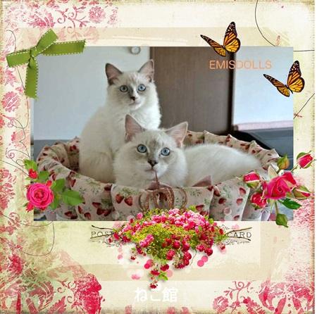 blog3_20150604125453591.jpg
