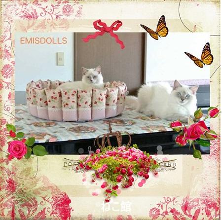 blog4_201506041254557df.jpg