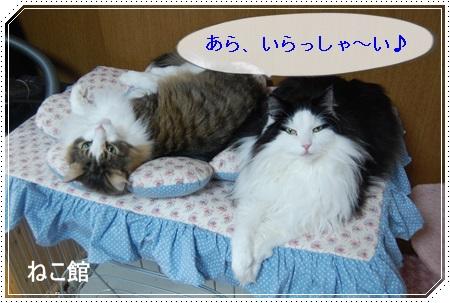 blog5_20150323144358df2.jpg
