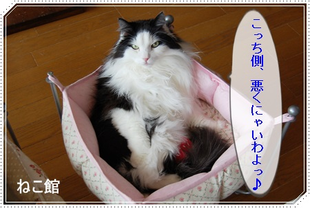 blog6_20150323144359338.jpg