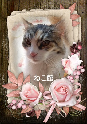 blog7_20150327151648d68.jpg
