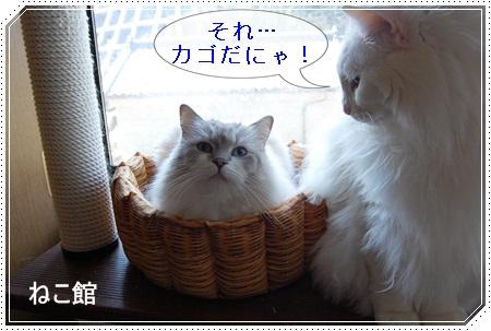 blog7_20150430100815a66.jpg