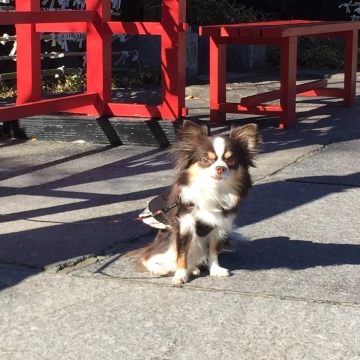 IMG_0215 伊豆高原 神社
