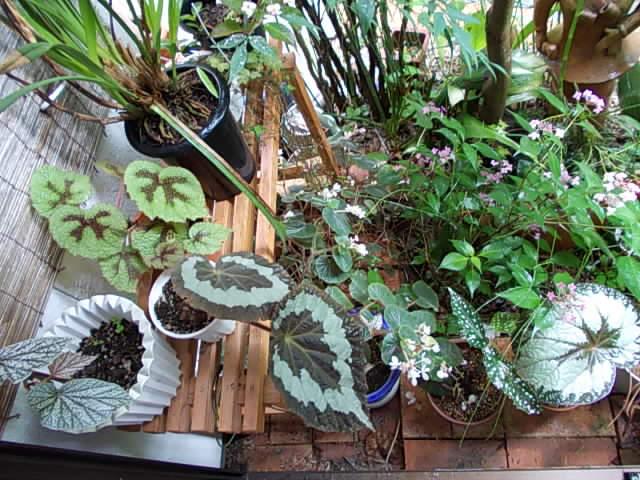 Garden 20150611