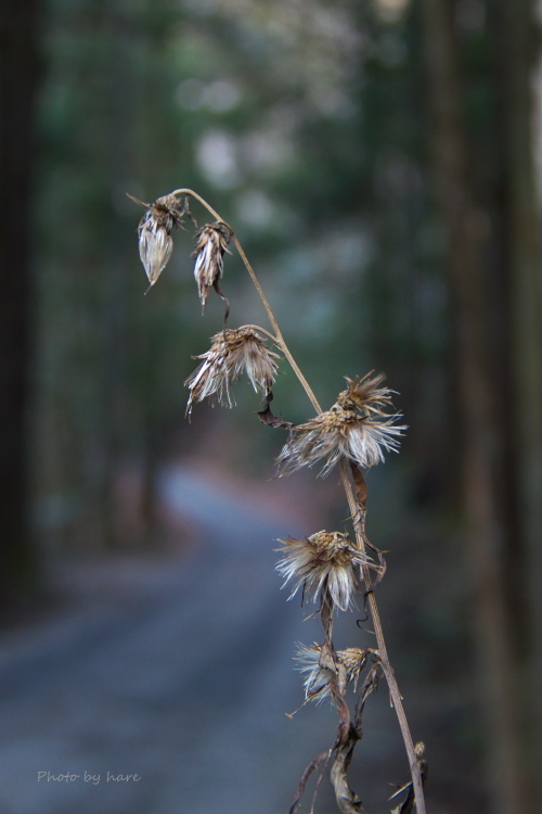 ココから先は森の神域