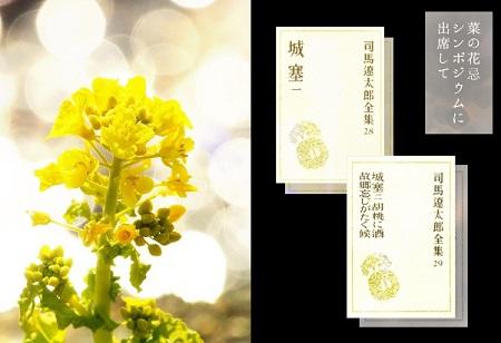 菜の花TOP