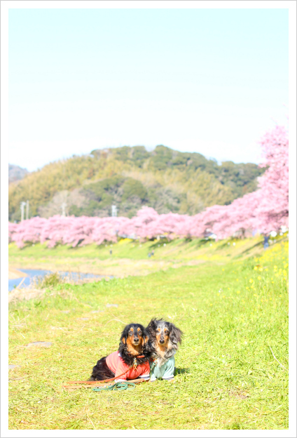 2015-03-04-02.jpg