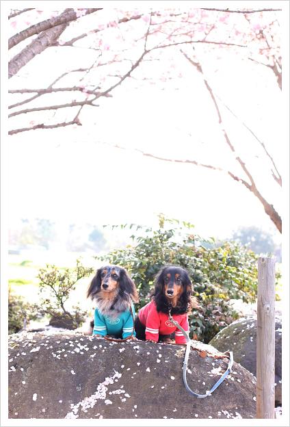 2015-03-25-01.jpg