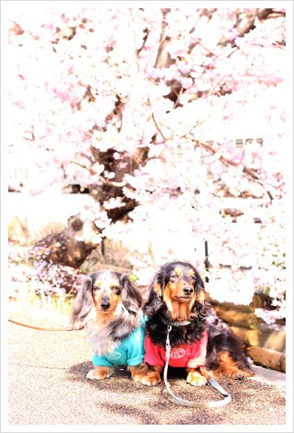 2015-03-30-06.jpg