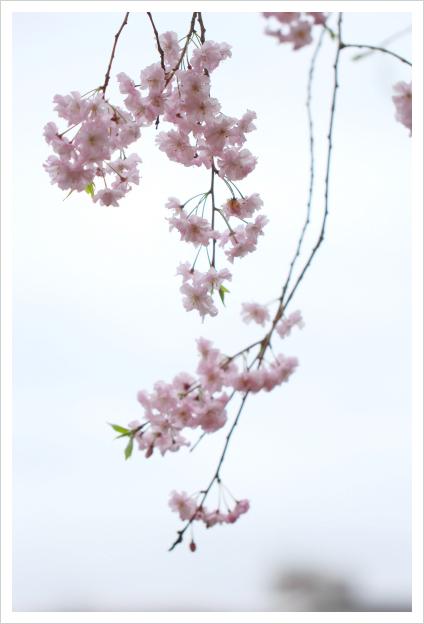 2015-04-14-03.jpg