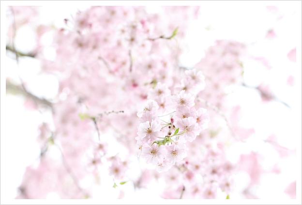 2015-04-19-03.jpg