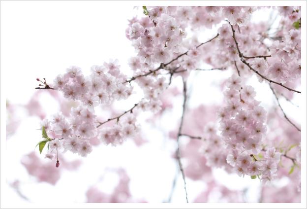 2015-04-19-09.jpg