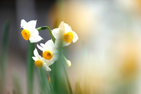待ち侘びた春の香り
