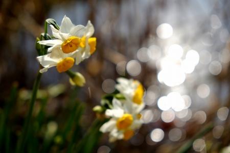 やわらかな春の日差し