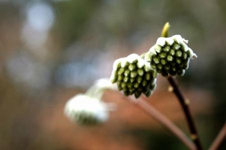 寄り添い春を待つ