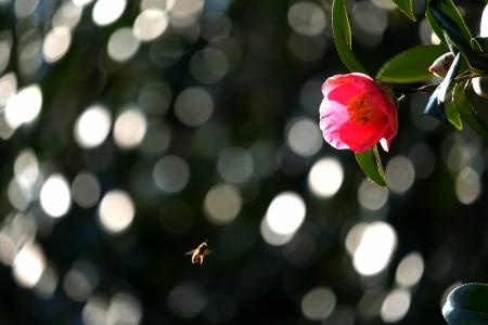 ぶんぶんぶんハチが飛ぶ