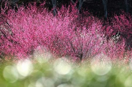 春の香り漂う
