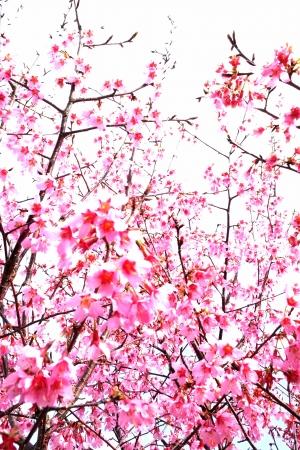 はじける春