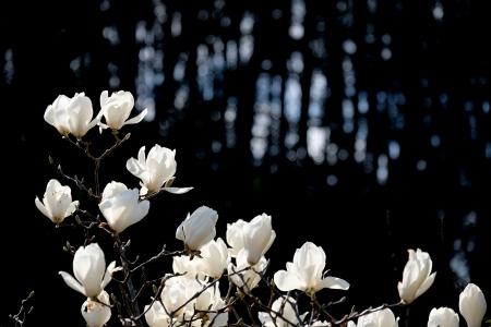 春を喜び祝す