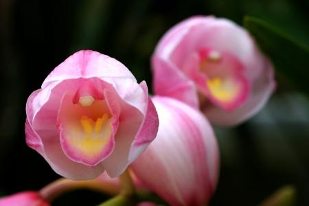 春の喜びを歌う