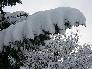 冬ごもり2