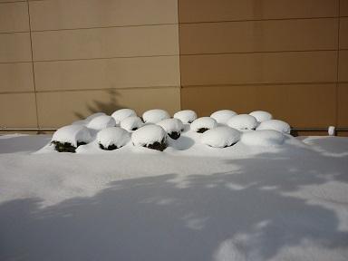 雪景色 6