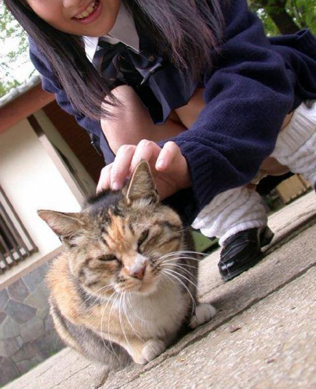 猫を触るためにしゃがんだ制服女子高生のパンチラ