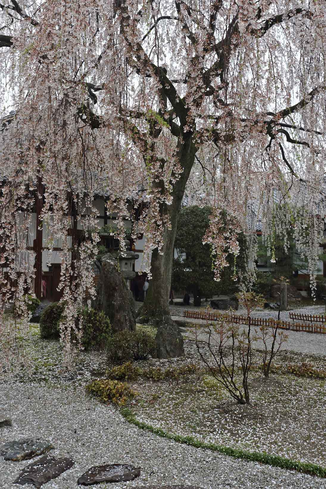 1日本満寺3