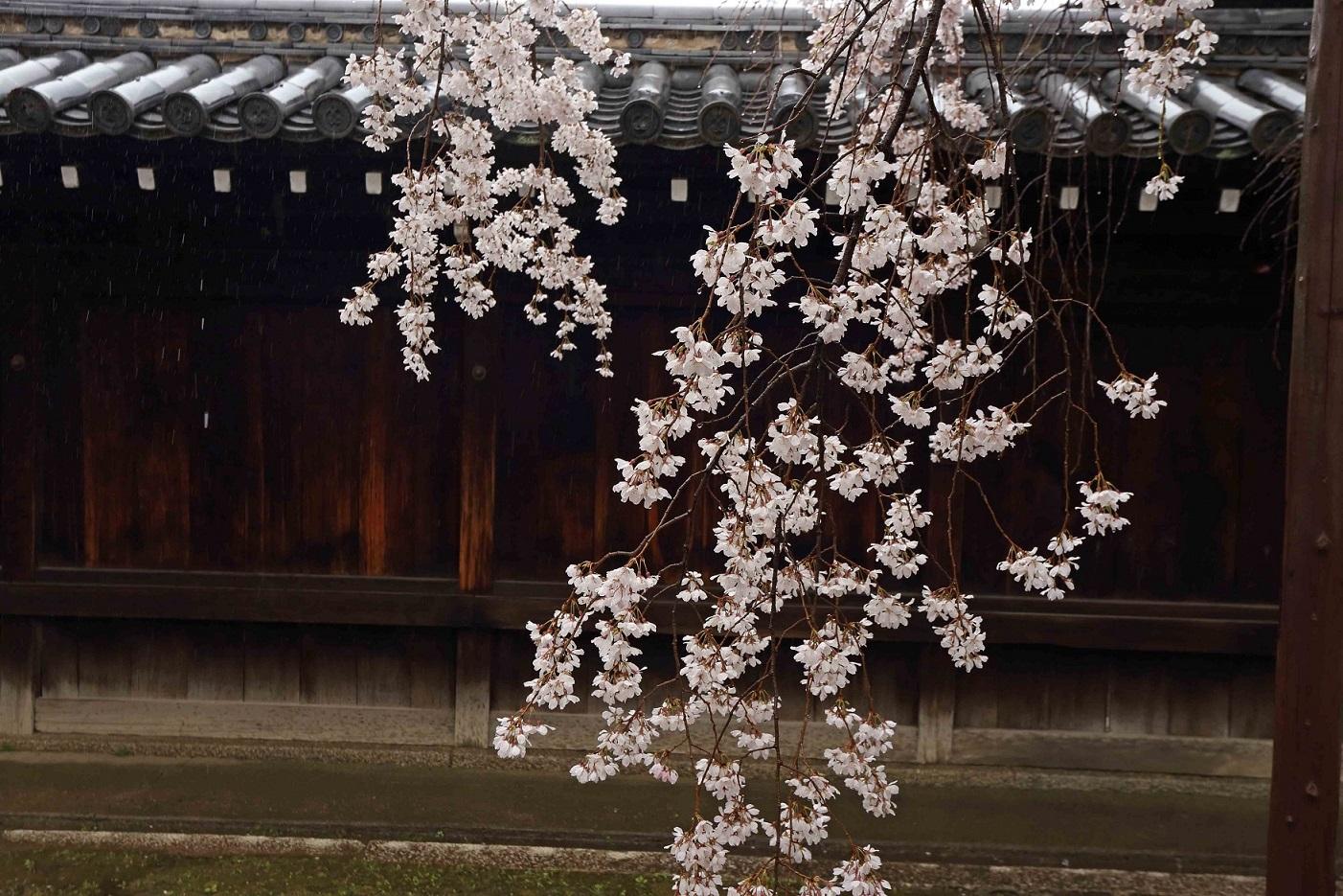 1日妙覚寺2