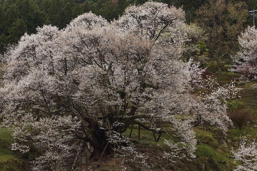 ブログ仏隆寺2