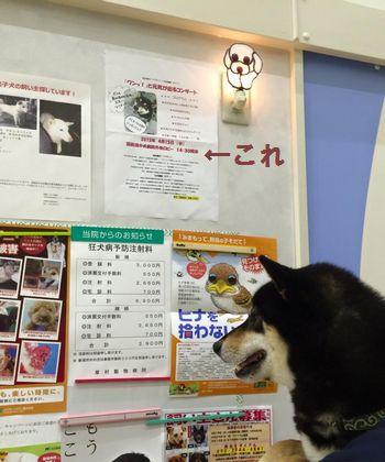 ひじき4169